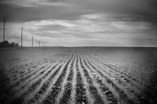 blown out fields by unusualenemy07