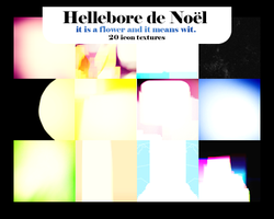 Hellebore de Noel by innocentLexys