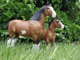 Collection Images: Clydesdale Mare and Foal by CarolaFunder
