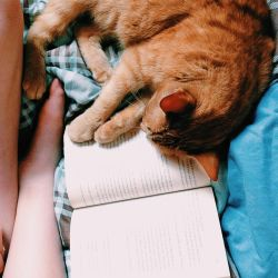 Brilliant Books and Cuddly Cats by ImpavidMinds