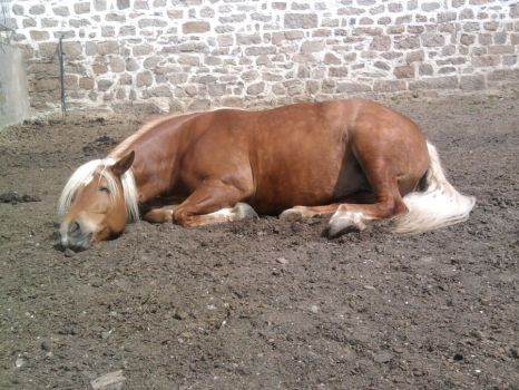 Sleeping Horse Stock 01 by Fabolouse-Stock