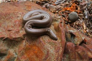 Rubber Boa by oOBrieOo