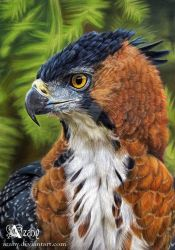 Ornate Hawk Eagle by Azany