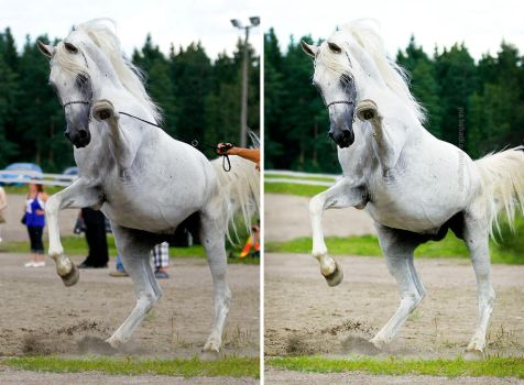 Arabian stallion - before and after by PiaBobacka