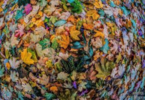 Leafs 3 by bulgphoto