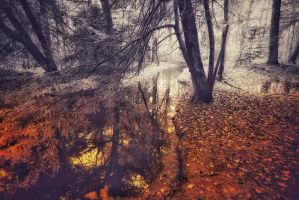 Autumnmood | 3 by Rob1962