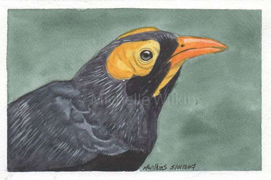 Yellow-faced Myna by DragonsDust