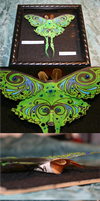 Luna moth compilation by Kalyandra