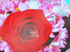 Red one. by skykeys