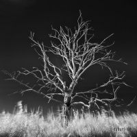 SUBART-LANDSCHAFT-INFRARED-008 by subart59