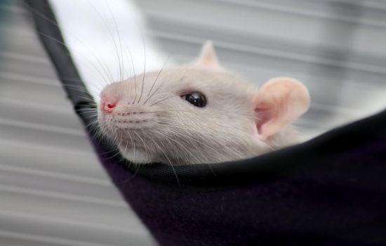 Rodent Relaxation by stphq