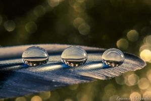 Three drops on a feather by Gallynette