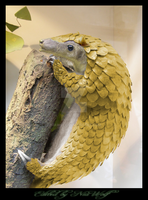 Sandshrew, the Pangolin