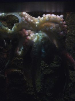 Octopus by mrssweettooth