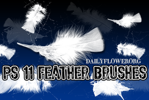 11 feather brushes by creativesplash