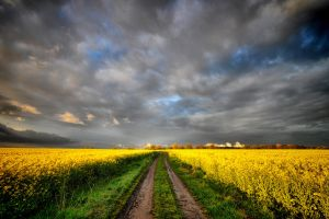 Road ahead by tomsumartin