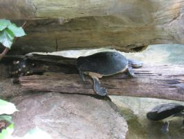 Turtles Chilling.. by Fireborn46