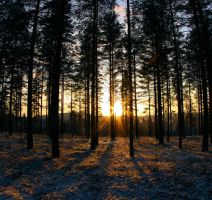 light in the woods by KariLiimatainen
