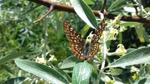 Butterfly  by rotarualexandra