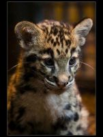 Little Clouded Panther. by sekhmet-neseret