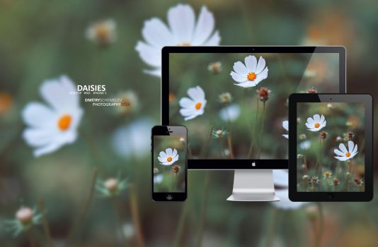 Daisies by enioku