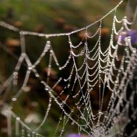 Web by nectar666