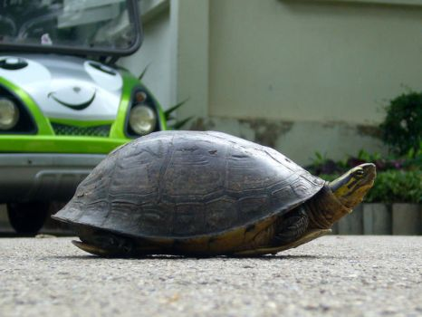 STOCK PHOTO: Tortoise by 2000lightyearsaway