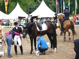 Dressage Riding Competition Stock Preparations by LuDa-Stock