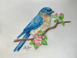 Blue Bird by msannaelise