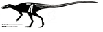Leaellynasaura amicagraphica skeletal restoration by ornithischophilia