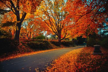 Peaceful Autumn by MyLifeThroughTheLens