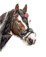 Gypsy vanner Portrait in colored pencil by LeontinevanVliet