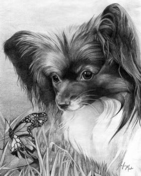 Papillon - For Renee by LainDragon