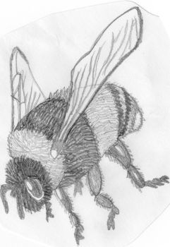 Bug drawing 5 - Bee by BethsFienneArt