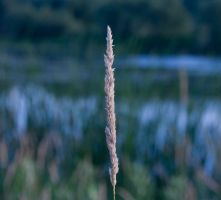 Just Grass by clarson04