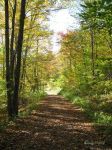The Autumn Path by cindy1701d