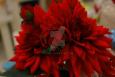 Red Flowers by car0003