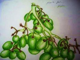 Grapes by MollySpeaight