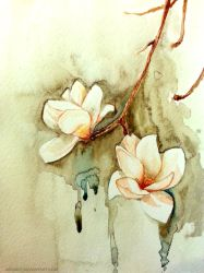 Magnolia by jakhont