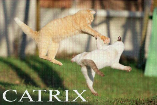 Catrix by LInconnu24