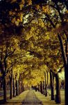 The Path of Yellow Leaves by beyondimpression