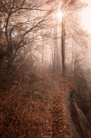 Misty Sun Kissed Trail by somadjinn