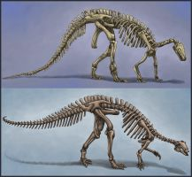 Camptosaurus Skeletons - Old and New by EWilloughby