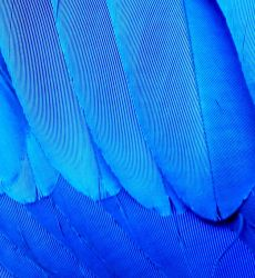 Parrot's feathers by AntaresAquarii
