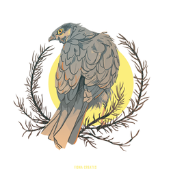 Sparrowhawk by FionaCreates