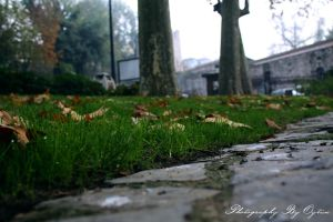 Water Blobs of Grass by crazytux