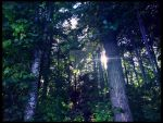 A ray of hope. by Bellelina-64