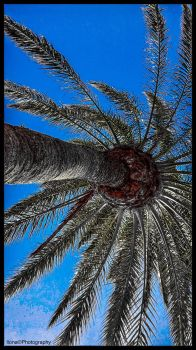 PALM TREE, FUERTEVENTURA by IME54-ART