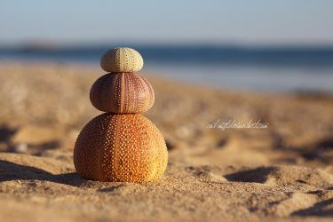 Urchin Cairn by Catlaxy