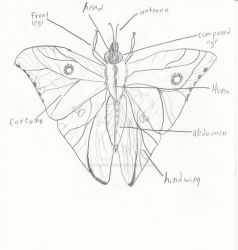 Another insect for my entomology project by MythicalRaptor3